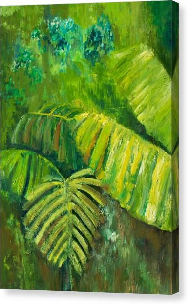Rain Forest Canvas Print by Carol P Kingsley