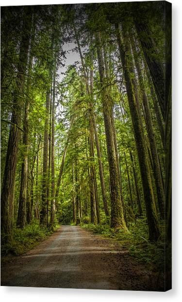 Randy Moss Canvas Print - Rain Forest Dirt Road by Randall Nyhof