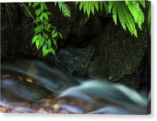 Rain Forest Stream Canvas Print