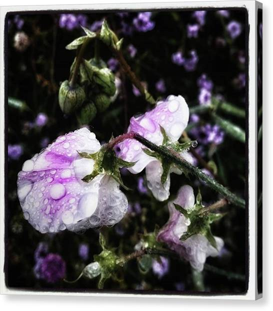 Canvas Print featuring the photograph Rain Kissed Petals. This Flower Art by Mr Photojimsf