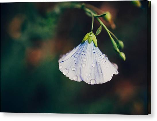 Flower Canvas Print - Rain Tickled by Tracy  Jade