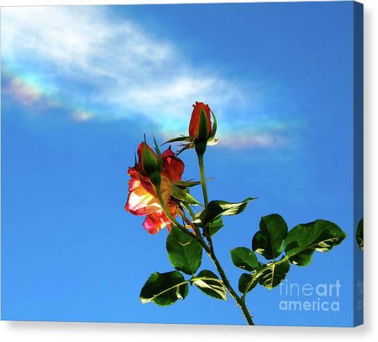 Rainbow Cloud And Sunlit Roses Canvas Print