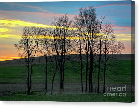 Rainbow Color Tree Horizon Canvas Print