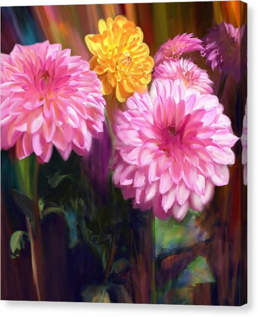 Rainbow Dahlias Canvas Print