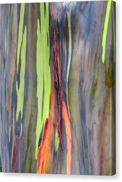 Rainbow Eucalyptus 13 Canvas Print