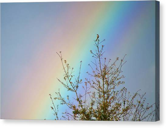Rainbow Canvas Print by Laurie Hasan