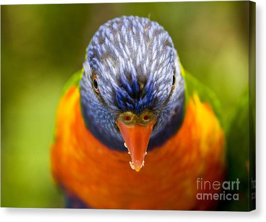 Rainbow Canvas Print - Rainbow Lorikeet by Sheila Smart Fine Art Photography