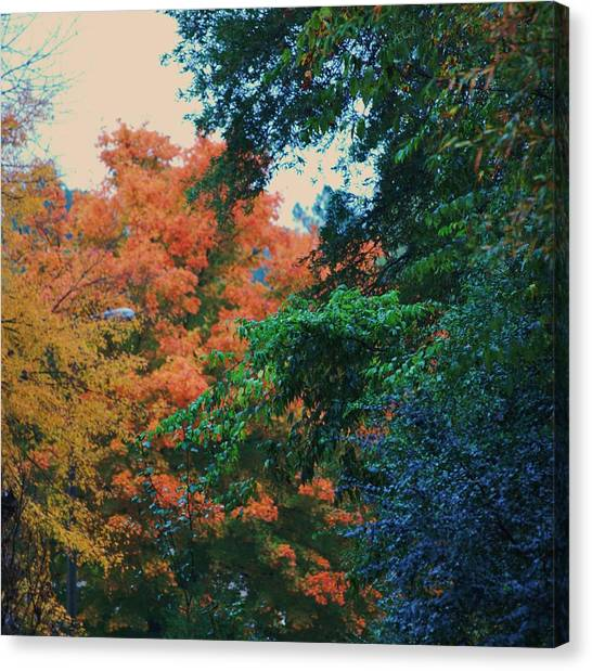 Rainbow Of Fall Canvas Print by Trudi Southerland
