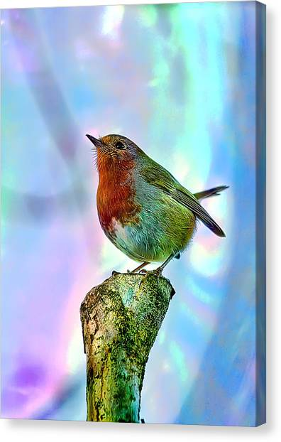 Rainbow Robin Canvas Print by Gouzel -