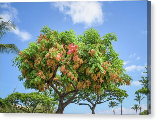 Canvas Print featuring the photograph Rainbow Shower Tree 1 by Jim Thompson