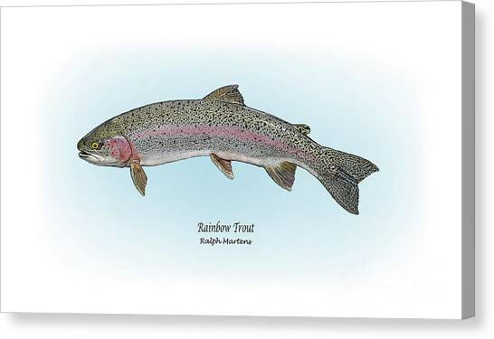 Sportfishing Canvas Print - Rainbow Trout by Ralph Martens