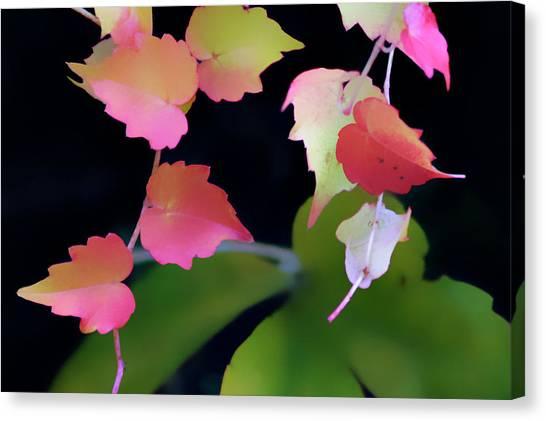 Rainbow Vine Leaves Canvas Print