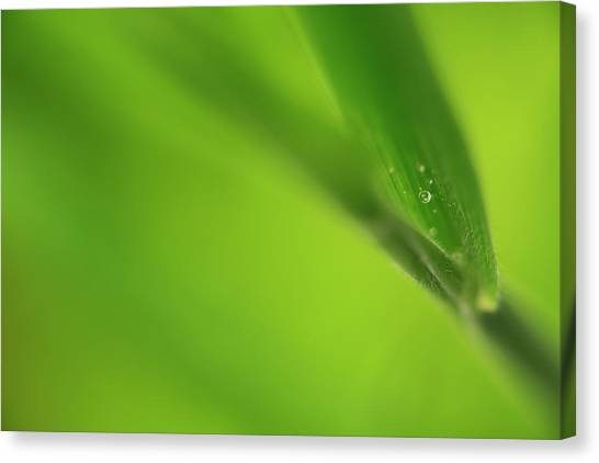 Raindrop On Grass Canvas Print