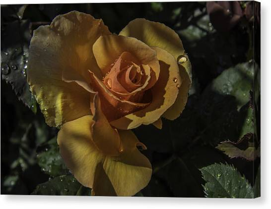 Raindrop Rose Canvas Print