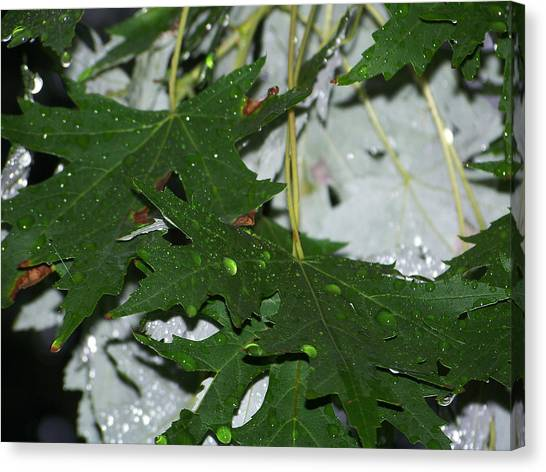 Canvas Print - Raindrops by Evelyn Patrick