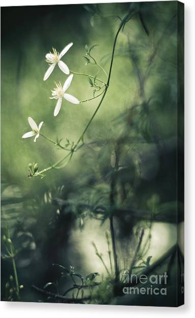Rainforest Dreaming Canvas Print by David Lade