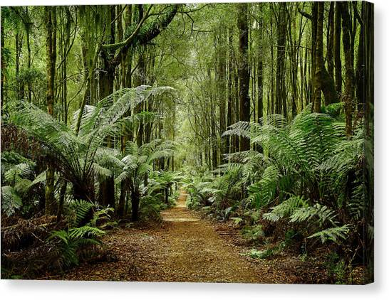Great Otway National Park Canvas Print - Rainforest Paradise by Catherine Reading