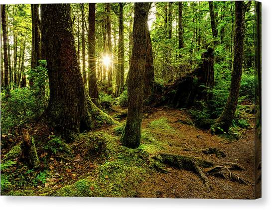 Sunset Canvas Print - Rainforest Path by Chad Dutson