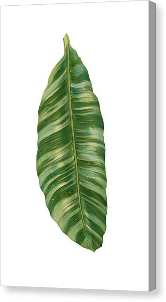 Banana Tree Canvas Print - Rainforest Resort - Tropical Banana Leaf  by Audrey Jeanne Roberts