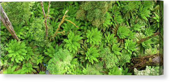 Great Otway National Park Canvas Print - Rainforest, Victoria - Australia Panoramic by Richie Gubler