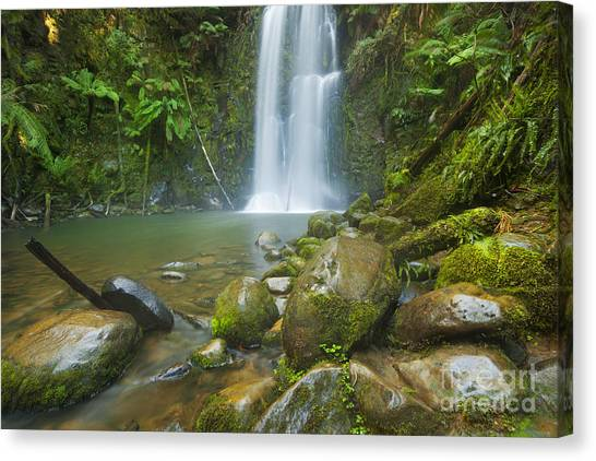 Great Otway National Park Canvas Print - Rainforest Waterfalls, Beauchamp Falls, Australia by Sara Winter
