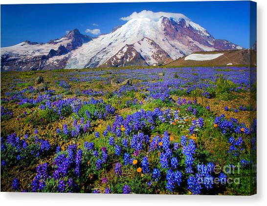 Mount Rainier Canvas Print - Rainier Lupines by Inge Johnsson