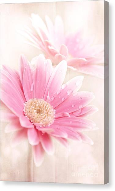 Raining Petals Canvas Print