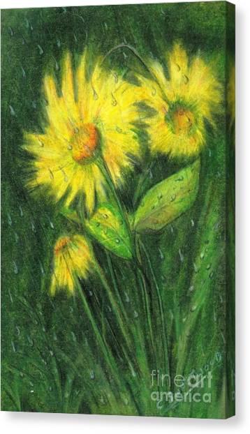 Rainy Daisy Canvas Print by Carol Sweetwood