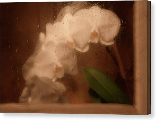 Orchids Canvas Print - Rainy Day Orchid by Tom Mc Nemar