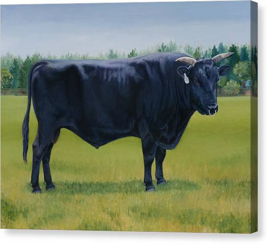 Livestock Canvas Print - Ralphs Bull by Stacey Neumiller