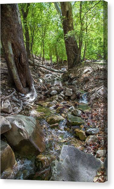 Ramsey Canyon Preserve Canvas Print