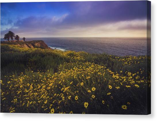 Rancho Palos Verdes Super Bloom Canvas Print
