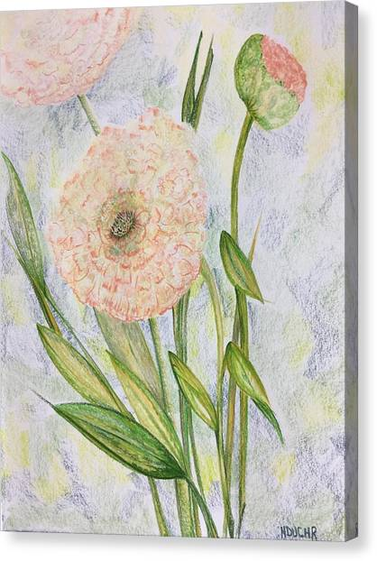 Canvas Print featuring the drawing Ranunculus by Norma Duch