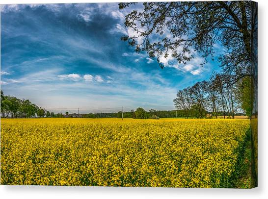 Rapeseed Field Canvas Print