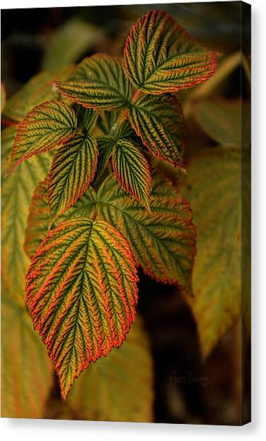 Raspberry Leaves Canvas Print