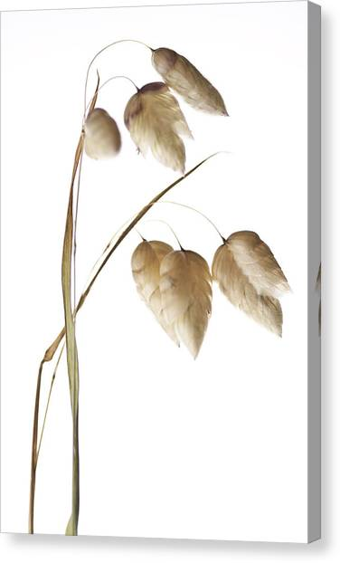 Rattlesnakes Canvas Print - Rattlesnake Grass Number 1 by Carol Leigh