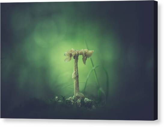 Shrooms Canvas Print - Ravaged Shroom In The Land Of Small by Shane Holsclaw
