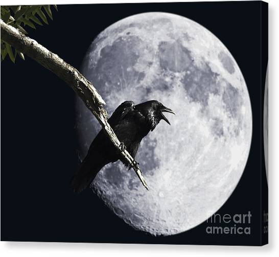 Canvas Print featuring the photograph Raven Barking At The Moon by Wingsdomain Art and Photography