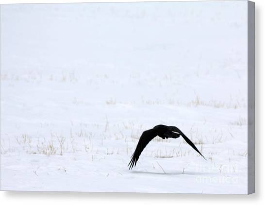 Raven In The Snow Canvas Print