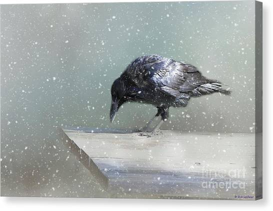 Raven In Winter Canvas Print