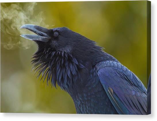 Starlings Canvas Print - Raven by Mariel Mcmeeking