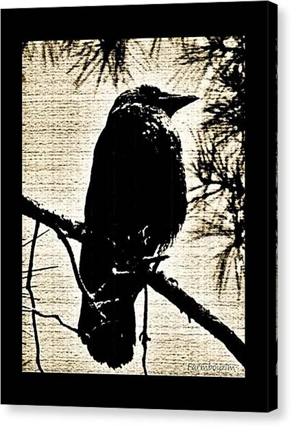 Raven On The Lookout Canvas Print