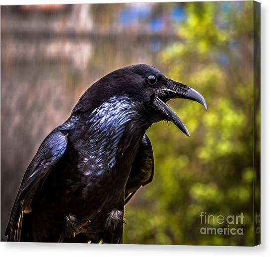 Raven Profile Canvas Print