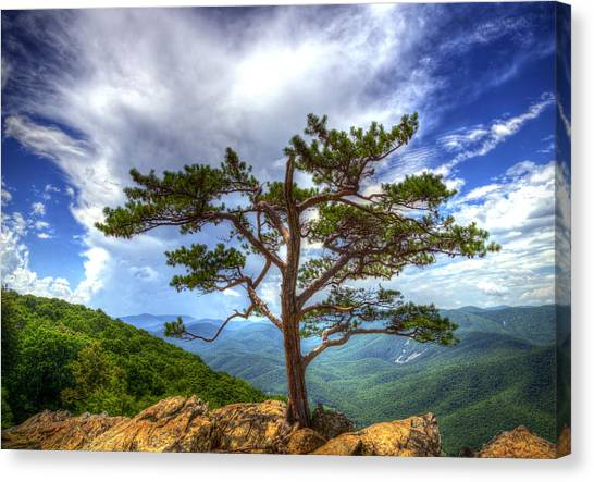 Ravens Roost Tree Canvas Print