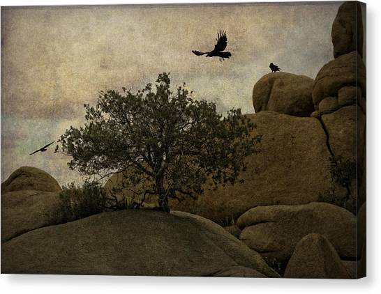Ravens Searching For Food Canvas Print