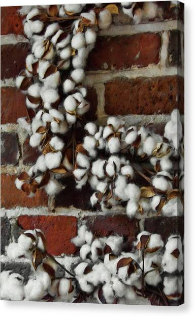 Raw Cotton Canvas Print by JAMART Photography