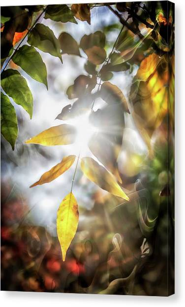 Wine Country Canvas Print - Ray Of Hope by Az Jackson