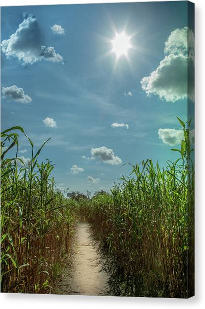 Corn Maze Canvas Print - Rays Of Hope by Karen Wiles