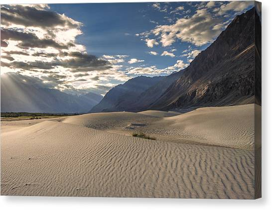 Rays On Dunes Canvas Print