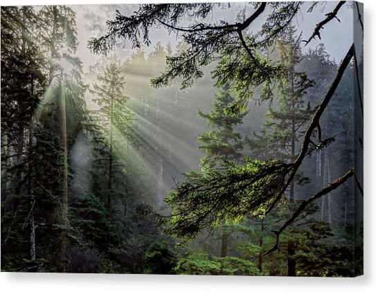 Rays Through An Oregon Rain Forest Canvas Print